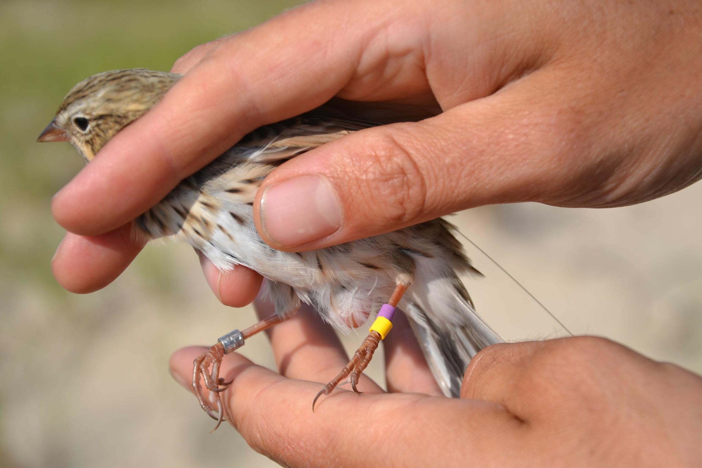 October | 2012 | Sable Island Gulls